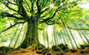 Tâmhisùgh, la benedizione druidica